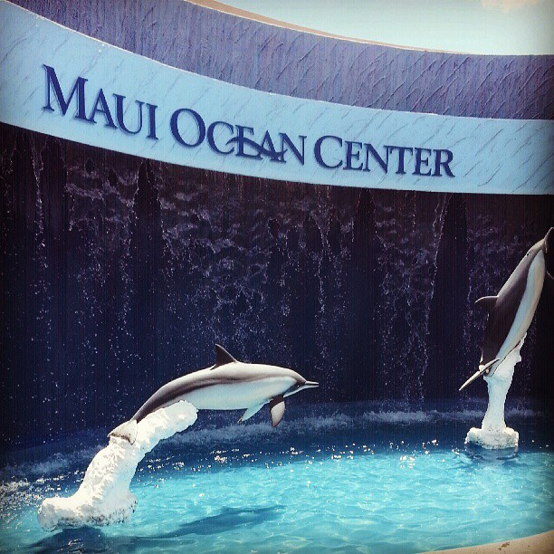 As close to marine life I will ever get. #sharks #whales #dolphins